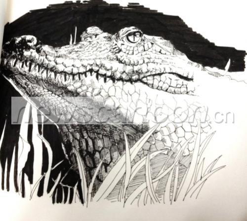; 鳄鱼(手绘)